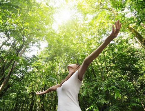 Lợi ích của lối sống gần gũi thiên nhiên